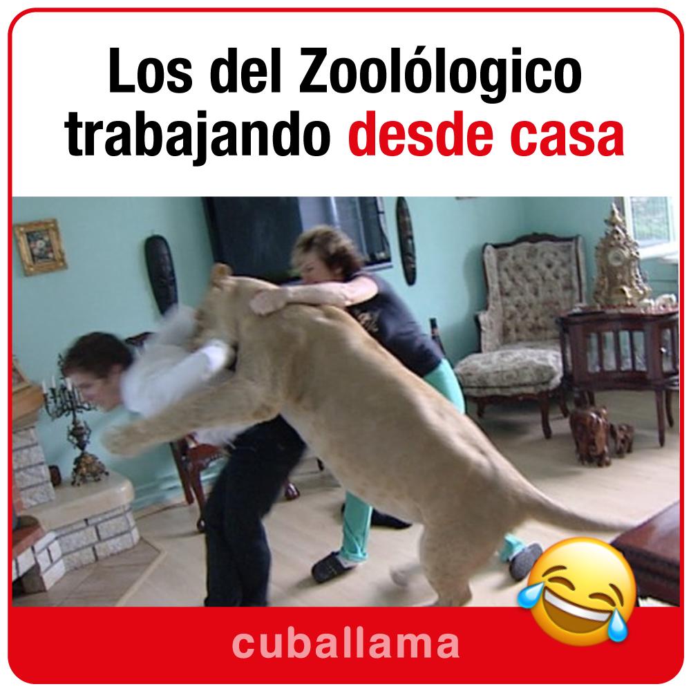 zoo-en-casa